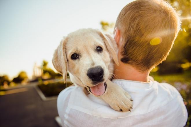 Nyakunkon a szúnyogszezon, fenyeget a szívférgesség – veszélyes fertőzés a kutyáknál