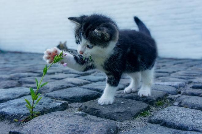 Hogyan kommunikálnak egymással a cicák és gazdáik?