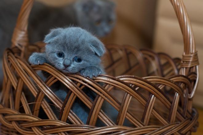 A lízingelt macska