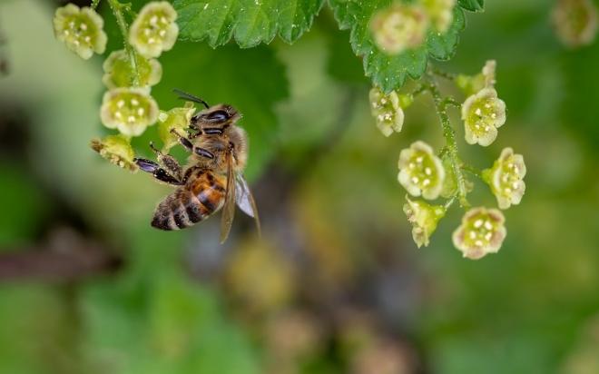 Hogyan menthetnénk meg a méheket?