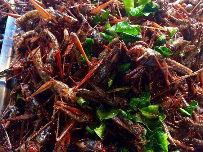 Antioxidánsban gazdag, ehető rovarok