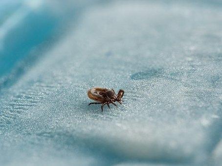 Új eljárás segíthet kimutatni a Lyme-kórt