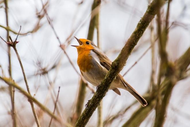 A madárállomány súlyos fogyatkozásától tartanak a kutatók