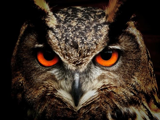 A madarak látása