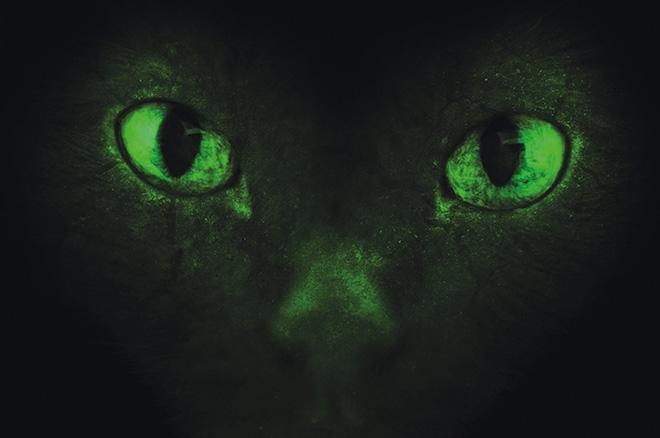 A Smaragdszemű Zombi
