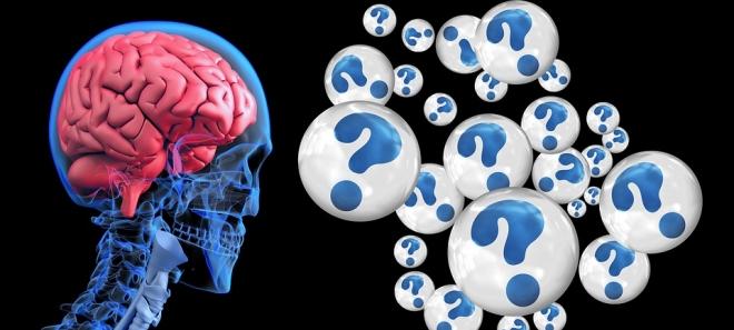 Az emberi agy fejlődik a leglassabban