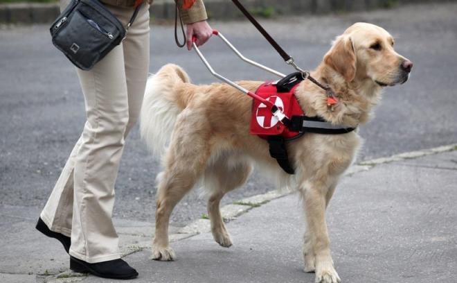 5 érdekes tény vakvezető kutyákról