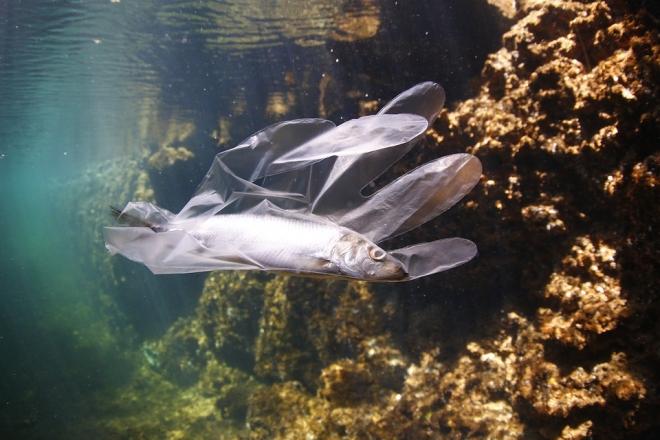 Több a műanyagdarabka, mint a hal Hawaii partjainál