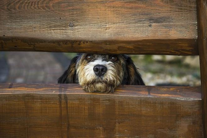 Fokozott figyelemre intenek az állatvédők!