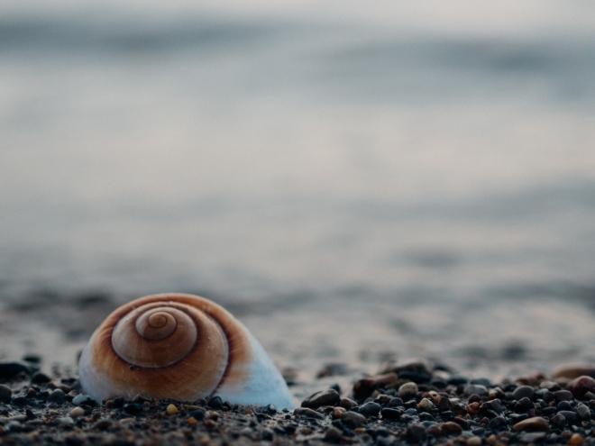 Kagylókkal tisztít vizet egy magyar vállalkozás
