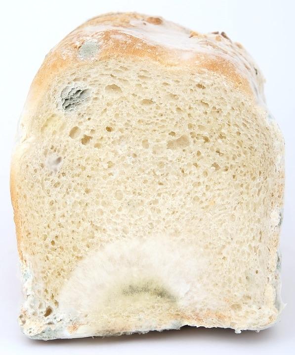 Hogy óvjuk meg kenyerünket a penésztől?