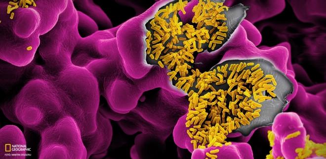 Mikrobiomok serege