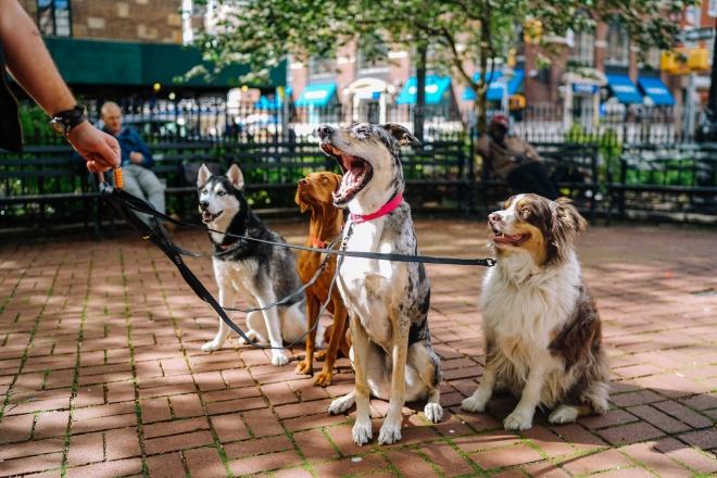 Felelős kutyatartás a város közepén