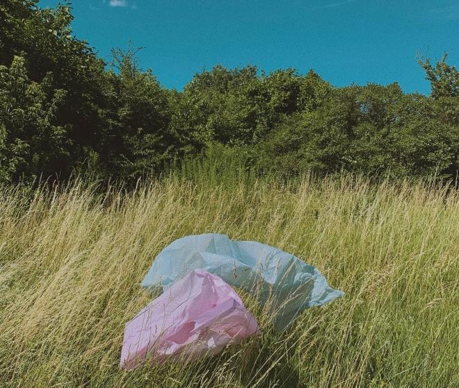 Műanyagevő lárvákat találtak