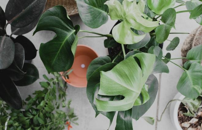 A tavaszi gondoskodást egész évben meghálálják a szobanövények