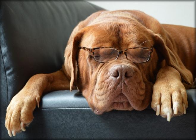 Kutyamatuzsálemek génjeit vizsgálták az ELTE kutatói