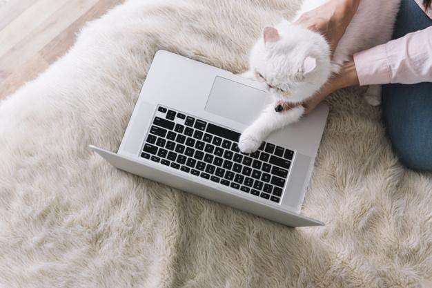 A háziállatok sokat segítenek a bezártság elviselésében