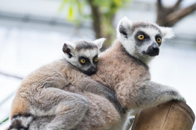 Így köszönti az édesanyákat a Fővárosi Állatkert