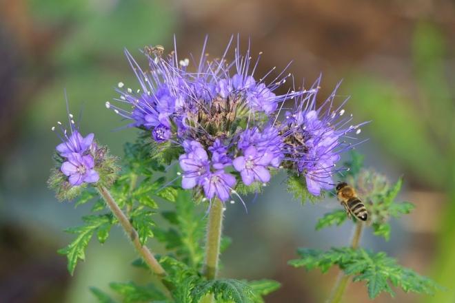 Ljubljana így gondoskodik a méhekről
