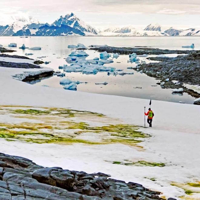 Algavirágzás az Antarktiszon