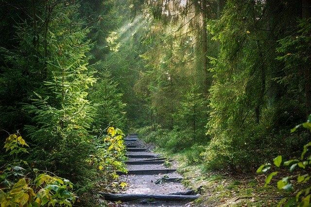 A fák lombkoronája véd a globális felmelegedéstől