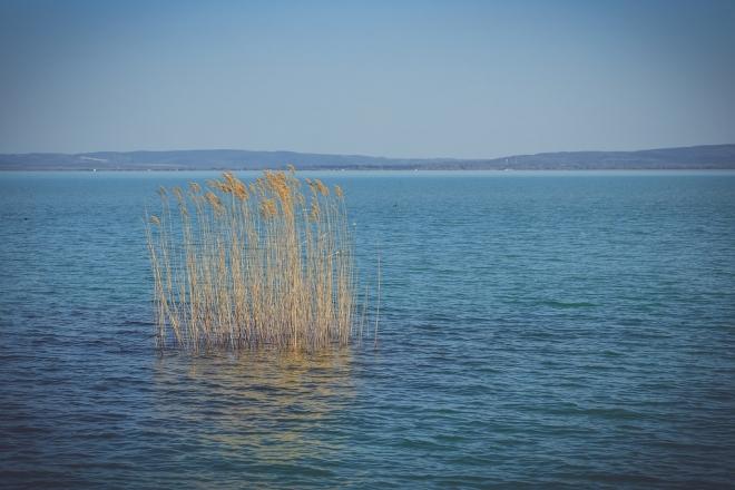 Nincs kockázatuk a Balatonban kimutatott gyógyszermaradványoknak