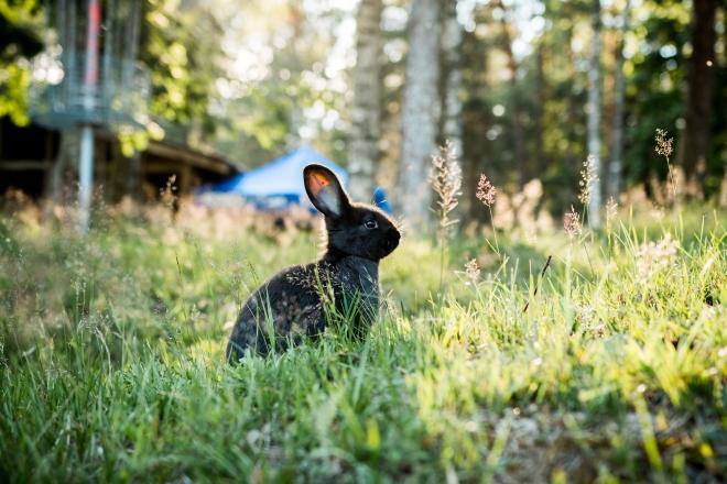 Felmérték, mely állatfajok a gázolások leggyakoribb áldozatai