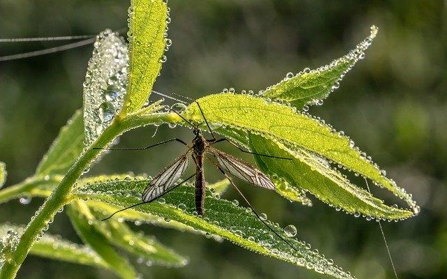 A Duna mentén folytatódik az országos szúnyoggyérítés