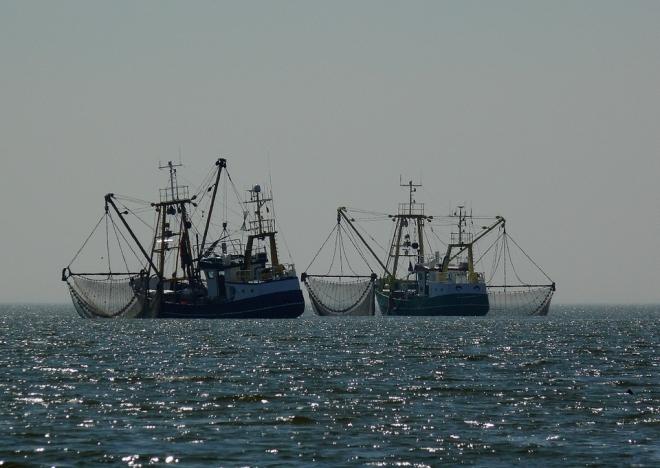 Válságos állapotban vannak a tengerek a túlhalászás miatt
