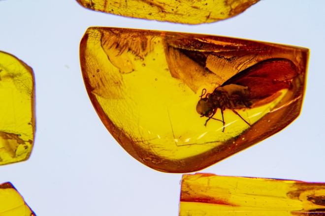 Így kerültek vízirovarok a borostyánkövekbe