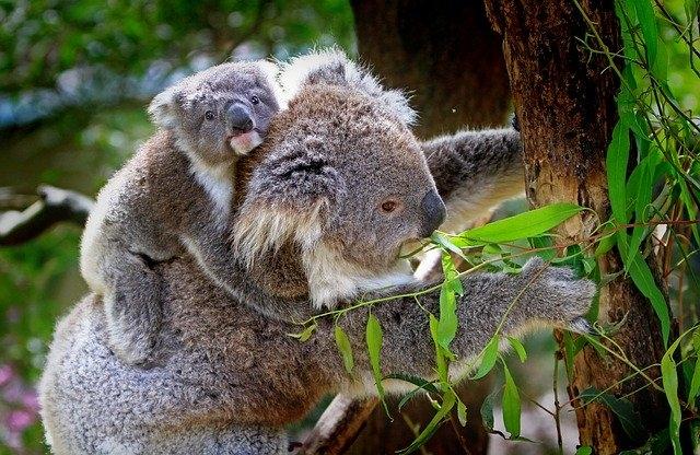 Veszélyeztetett állatok védelmére hoznak létre nemzeti parkot