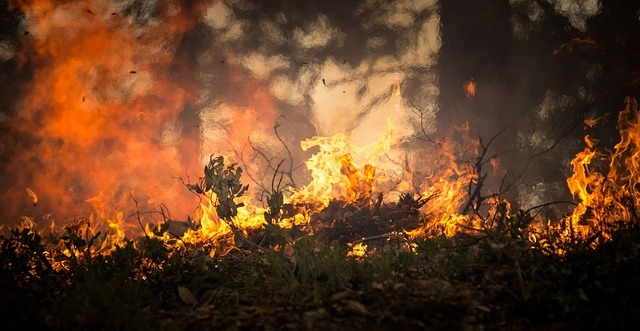 Júniusban ismét nőtt az erdőtüzek száma Brazíliában