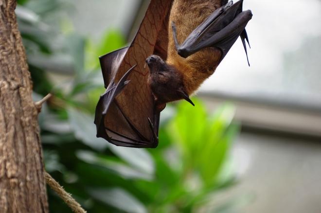 Mit kell tudni az állatról emberre terjedő betegségekről?