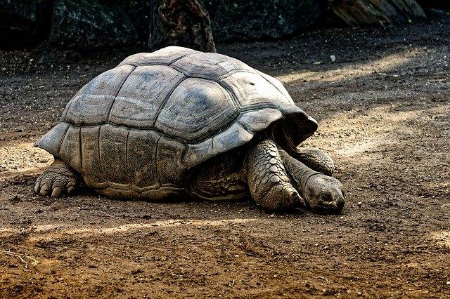 Tizenegymillió éves teknős maradványait találták meg