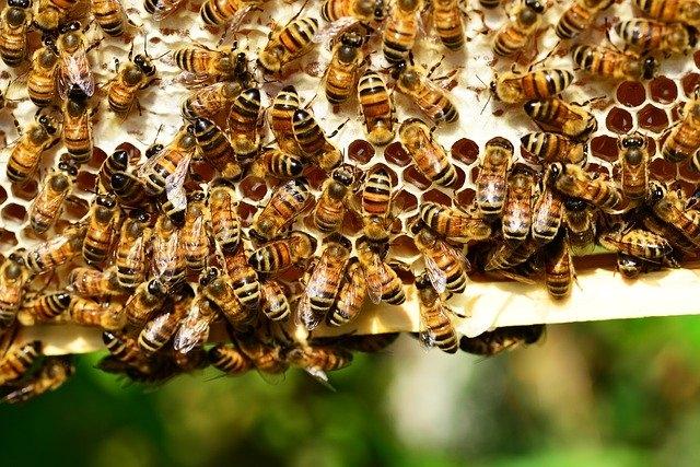 Sem mézet, sem méheket nem lehet kihozni Pécs területéről