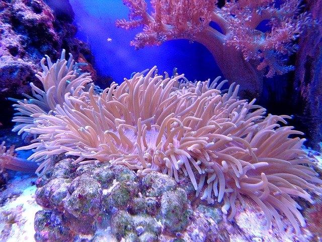 A klímaváltozásra kevésbé érzékeny korallokat fedeztek fel
