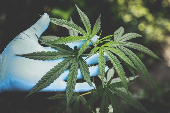 A marihuána hatással lehet az öregedéssel kapcsolatos génekre