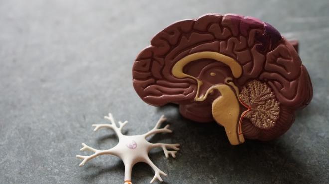 Mi befolyásolja az emberi intelligenciát?