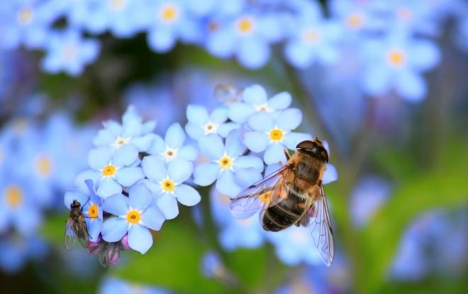 Több zöldségféle mennyisége csökkenhet a méhek hiánya miatt