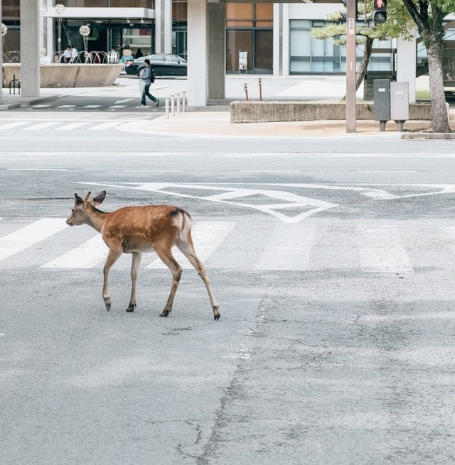 A vadvilág egy része képes alkalmazkodni az emberi jelenléthez