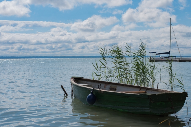 Kihaltnak hitt őshonos halfajt találtak a Balatonban