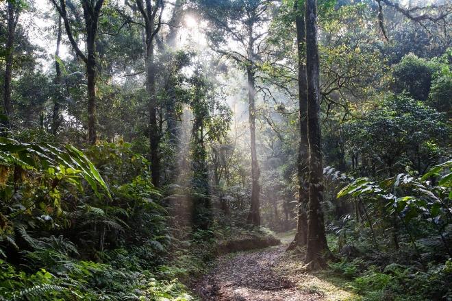Környezeti hatások okozhatták őseink kihalását