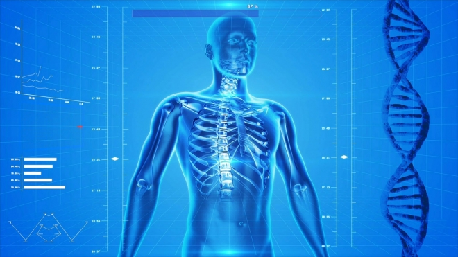 Új szervet azonosítottak az emberi testben