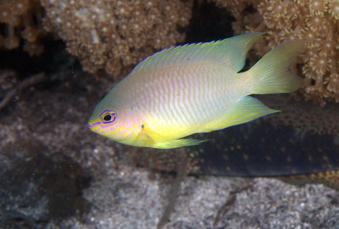 A mikroműanyagok a tengeri halak viselkedését is befolyásolják