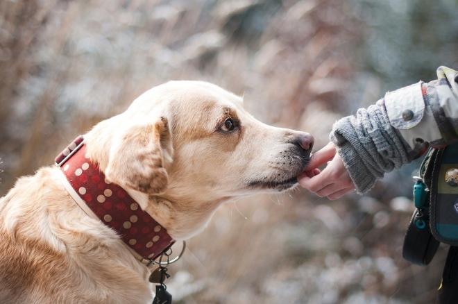 A kutyasétáltatás kivételt jelenthet a kijárási tilalom alól