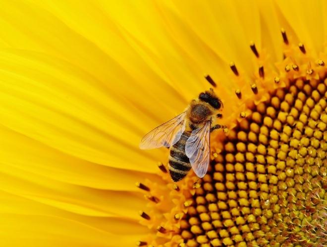 Új módszerrel mutatható ki a méheket pusztító méreg