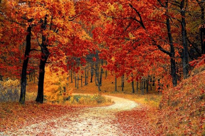 Komplex tényezők befolyásolják az őszi lombhullást