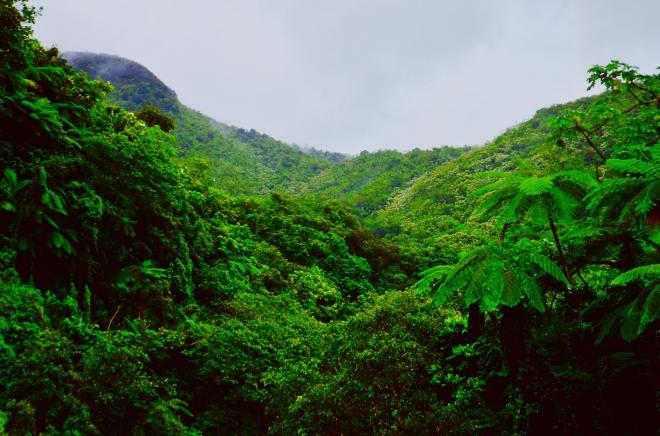 Spanyolország nagyságú erdőség tűnt el Amazóniából