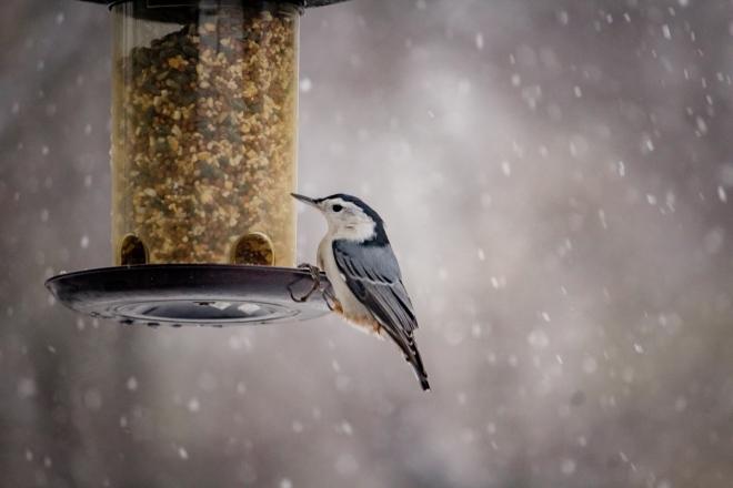Idén kevesebb madár keresi a mesterséges etetőket