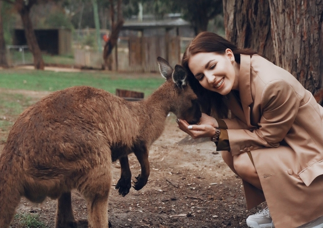 A kenguruk a kutyákhoz hasonlóan kommunikálnak